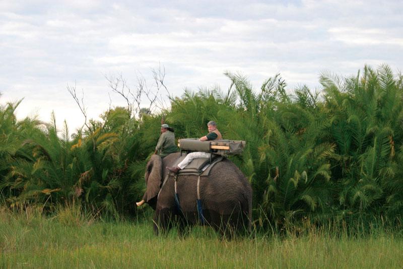 MermisJoAnn_elephant-back-ride
