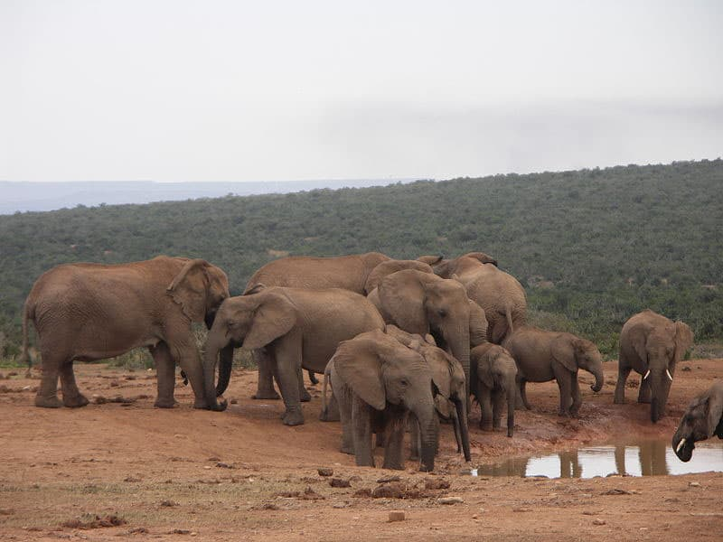 Elephant in Addo National Park