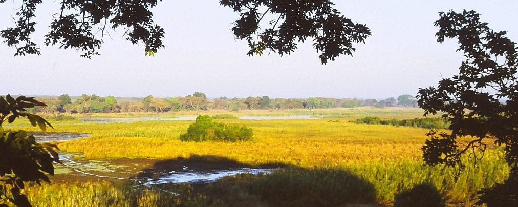 Kasanka National Park
