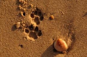 Animal Tracks at Saadani National Park