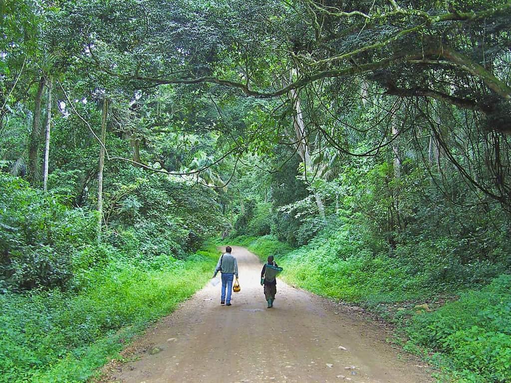 Walking through Toro-Semliki Game Reserve