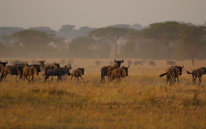Beautiful Serengeti National Park