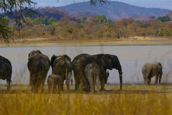 Vwaza Marsh Game Reserve Elephants