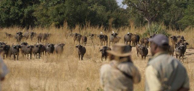 Escorted Safaris