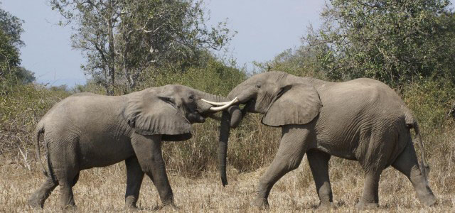 Photographic Safaris are a great way to save the memories